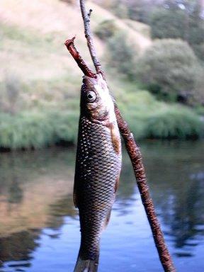 Fotografía do autor da www. Río Navea. Chandrexa de Queixa. Boga de río.